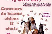Concours De Beauté Chiens Et Chats